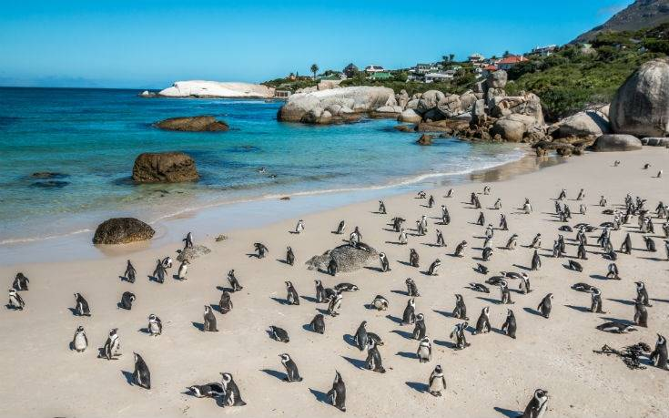 boulders beach south africa2