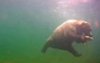 Δείτε μια αρκούδα να πιάνει ψάρι… κάτω από το νερό
