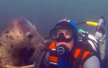 Δείτε μια αξιολάτρευτη φώκια να πιάνει φιλίες με… δύτη