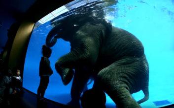 Οργή για τα υποβρύχια κόλπα των ελεφάντων σε ζωολογικό κήπο