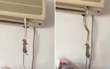 Σκηνή άγριας φύσης με φίδι και ποντίκι εκτυλίχθηκε μέσα σε… κλιματιστικό