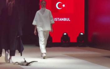 Η γάτα που έκανε πασαρέλα σε επίδειξη μόδας στην Τουρκία