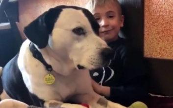 Πώς ένα αγοράκι 7 χρονών έσωσε 1.200 σκυλιά