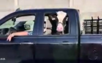Αυτή είναι η πιο διάσημη αγελάδα του διαδικτύου