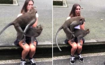 Μαϊμούδες επέλεξαν να ζευγαρώσουν στο πιο λάθος μέρος