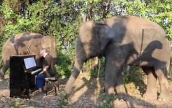 Ανακουφίζει ελέφαντες που υποφέρουν με… κλασικές μελωδίες