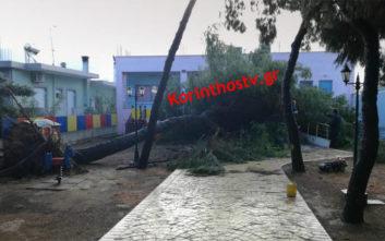 Δέντρο έπεσε στην αυλή νηπιαγωγείου
