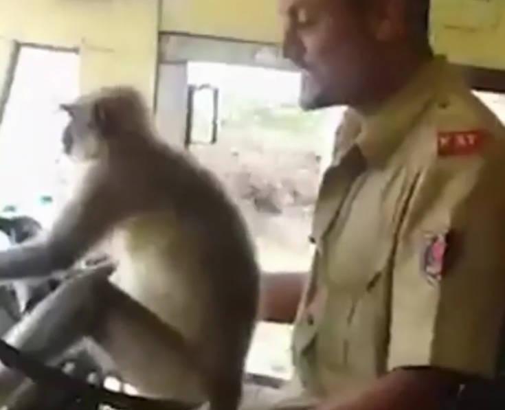 Άφησε τη μαϊμού να οδηγήσει το λεωφορείο και βρήκε τον μπελά του db00ac779e2