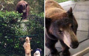 Οικογένεια από αρκούδες επισκέπτεται το ίδιο εξοχικό τα τελευταία 10 χρόνια