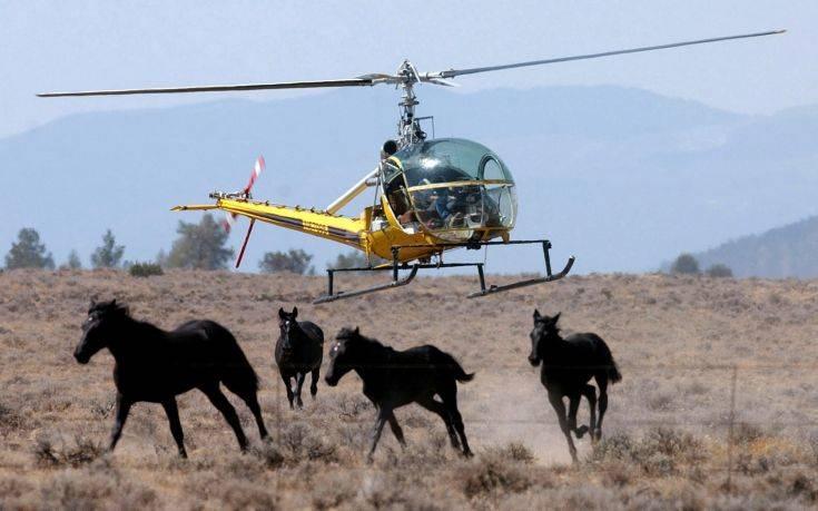 Αγωνία για τη «σφαγή» των άγριων αλόγων της Καλιφόρνιας
