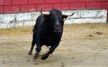 Ταύρος σκότωσε γυναίκα σε φεστιβάλ στη Γαλλία