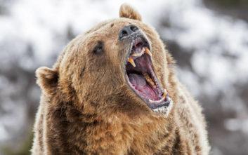 Κυνηγός παλεύει για τη ζωή του γιατί τον καταπλάκωσε η αρκούδα που σκότωσε