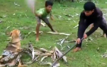 Η τρομακτική μάχη τριών αγοριών με βόα για να σώσουν έναν σκύλο
