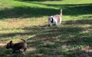 Αυτό το κουτάβι το βγάζει βόλτα ο… γάτος