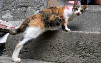 Βρετανός τουρίστας πέθανε από δάγκωμα γάτας στο Μαρόκο