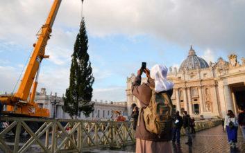 Στην πλατεία του Αγίου Πέτρου το παραδοσιακό έλατο των Χριστουγέννων