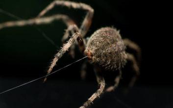 Να γιατί είναι τόσο ισχυρό το μετάξι της αράχνης