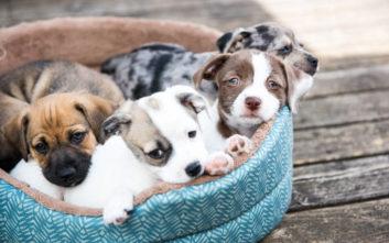 Τηλεφώνησε στην εκτροφέα σκύλων για να τη ρωτήσει αν μπορεί να… φάει ένα κουτάβι