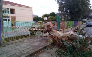 Δέντρο έπεσε στην είσοδο σχολείου και τη διέλυσε
