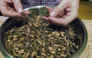 Σνακ από έντομα σε σούπερ μάρκετ της Βρετανίας