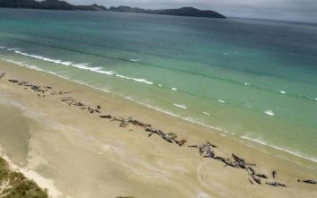 Περιβαλλοντική τραγωδία με 145 νεκρές φάλαινες στη Νέα Ζηλανδία