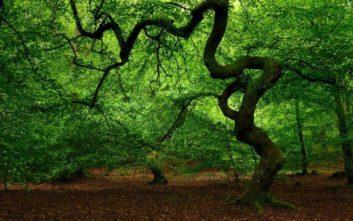 Το μυστηριώδες «Δάσος των Τρολ» στη Σουηδία