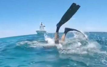 Καρχαρίας δαγκώνει δύτη στο κεφάλι