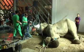 Χειρουργική επέμβαση σε χαυλιόδοντα ελέφαντα στο ζωολογικό κήπο της Τιφλίδας