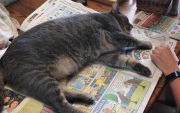 Όταν θες να διαβάσεις αλλά έχεις γάτα