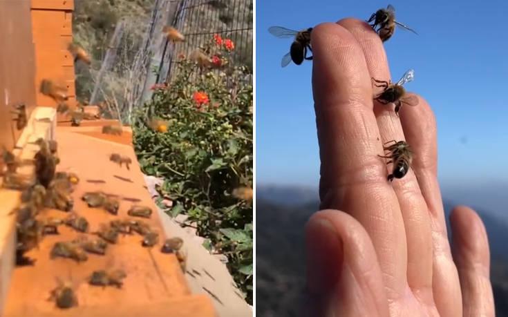 Πώς κατάφερε μια αλλεργική στις μέλισσες να γίνει… μελισσοκόμος