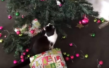 Γάτες εναντίον χριστουγεννιάτικων δέντρων 1-0