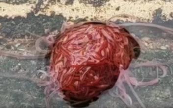 Ένα μυστηριώδες πλάσμα πιάστηκε στον φακό