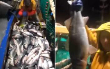 Η ευρωπαϊκή οδηγία ανάγκασε τον ψαρά να ρίξει τη ζηλευτή ψαριά πίσω στη θάλασσα