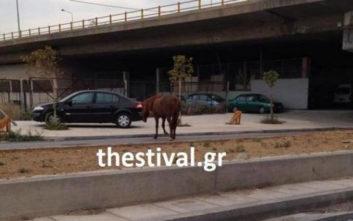 Άλογο έκοβε βόλτες σε δρόμο της Θεσσαλονίκης