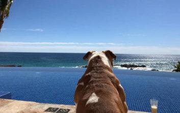 Το εξωφρενικό «μηνιάτικο» που βγάζει ο σκύλος του Λιούις Χάμιλτον