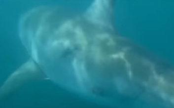 Το ψάρι τσίμπησε και ήταν… λευκός καρχαρίας