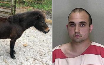 Νεαρός ομολόγησε ότι βίασε άλογο μινιατούρα τέσσερις φορές σε μια εβδομάδα