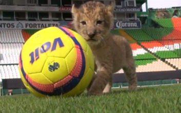 Η Λεόν από το Μεξικό πήρε για μασκότ της ένα πραγματικό λιοντάρι