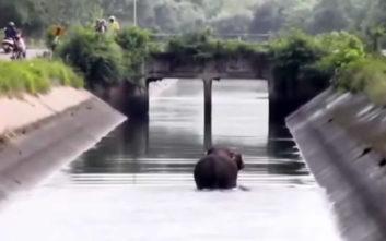 «Γάτος» ο ελέφαντας, χρησιμοποίησε το σχοινί για να σωθεί από τον πνιγμό