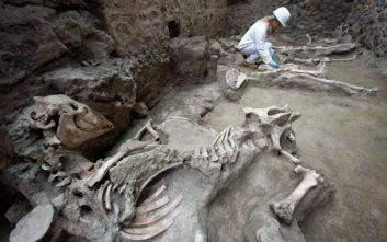 Απολιθωμένο άλογο με χαλινάρια βρέθηκε στα ερείπια βίλας στην Πομπηία