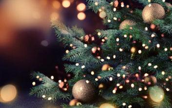 Το πιο ασυνήθιστο ζώο των Χριστουγέννων