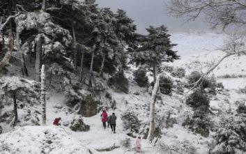 Εικόνες από την χιονισμένη Πάρνηθα