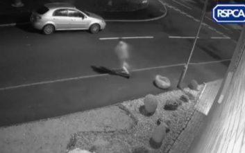 Η σπαρακτική αντίδραση σκύλου όταν ο ιδιοκτήτης του τον εγκαταλείπει και φεύγει τρέχοντας