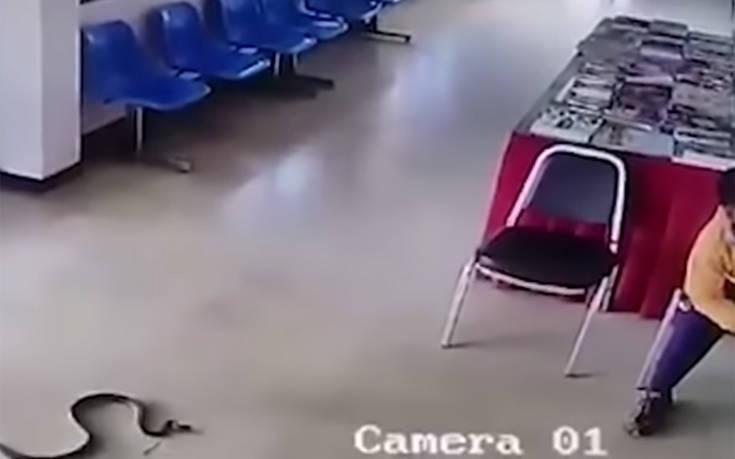 Το φίδι του την «έπεσε» αναίτια κι εκείνος έπρεπε να αντιδράσει