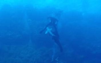 Έκανε κατάδυση με καρχαρίες όταν ένας τον άρπαξε από το πόδι