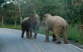 Τιτανομαχία ελεφάντων στην… άσφαλτο