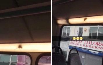 Η έγκυος παραπονέθηκε για το ποντίκι στο λεωφορείο, πήρε αποστομωτική απάντηση από τον οδηγό