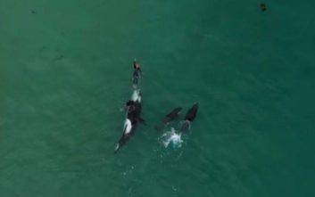 Φάλαινες δολοφόνοι περιτριγυρίζουν κολυμβήτρια και η συνέχεια εκπλήσσει