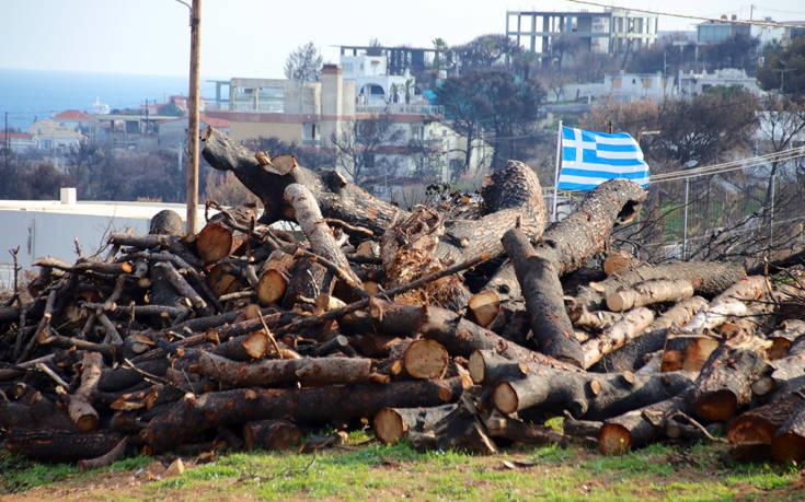 Σε εξέλιξη με γοργούς ρυθμούς το σημαντικό έργο που μεταμορφώνει τις περιοχές που κάηκαν το καλοκαίρι