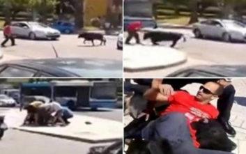 Κατάφερε να ακινητοποιήσει μαινόμενο ταύρο
